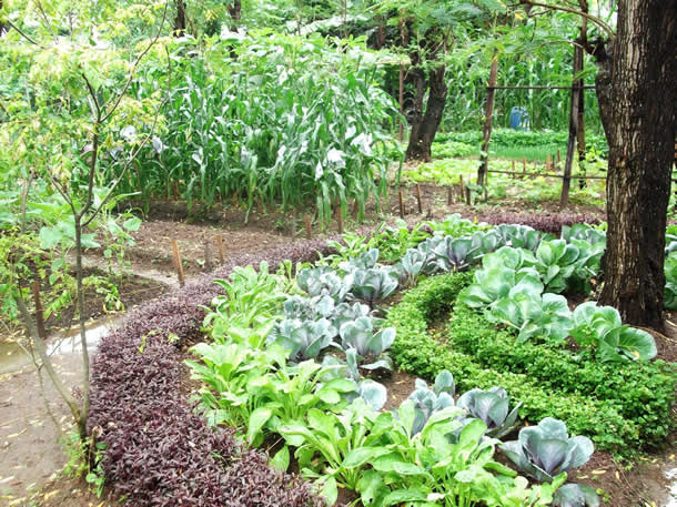 Taller pr ctico huerta org nica biointensiva for Garden designs in sri lanka