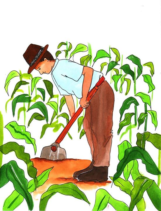 Aprende a sembrar milpa for Sembrar maiz y frijol juntos