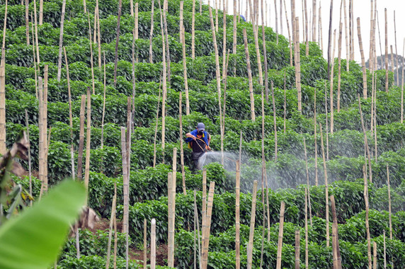 Algunos productos fitosanitarios son sospechosos de contener disruptores endocrinos. Imagen: CIAT/Flick