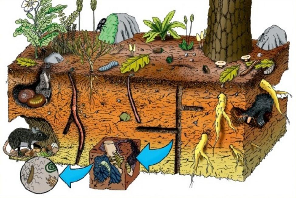 Micro macro organismos en el suelo for Como esta constituido el suelo